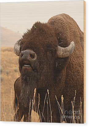 Bison Bellowing At The Sky Wood Print by Max Allen