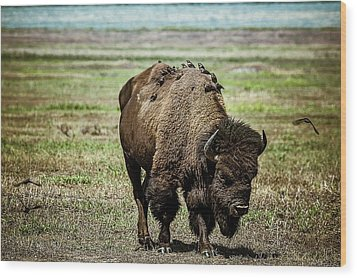 Wood Print featuring the photograph Bison Bird Bus by Mary Hone