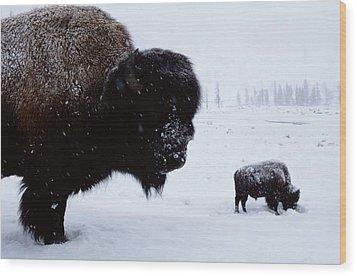 Bison Bison Bison In The Snow Wood Print by Joel Sartore