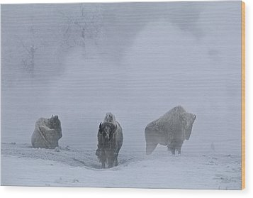 Bison Bison Bison Stand During Winter Wood Print by Bobby Model