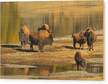 Wood Print featuring the photograph Bison Family Crossing by Adam Jewell
