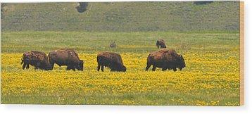 Bison Herd Wood Print by Alan Lenk