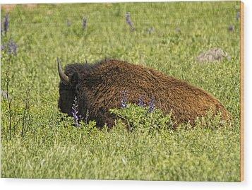 Bison In Bluebonnests Wood Print