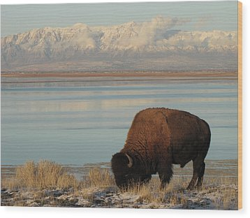 Bison In Front Of Snowy Mountains Wood Print