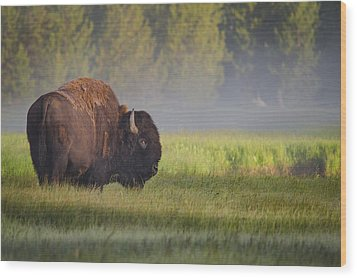 Bison In Morning Light Wood Print by Sandipan Biswas