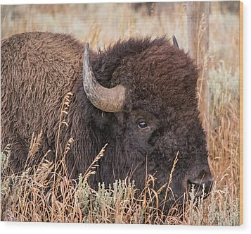 Wood Print featuring the photograph Bison In The Grass by Mary Hone