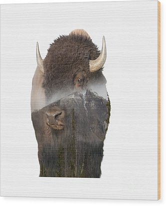 Bison Mountain  Wood Print