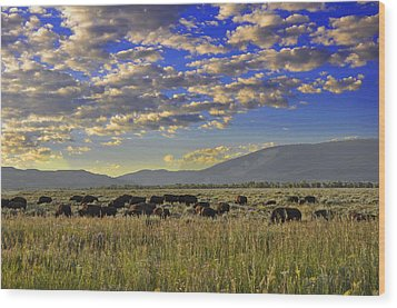 Bison On Antelope Flats Wy Wood Print by Vijay Sharon Govender