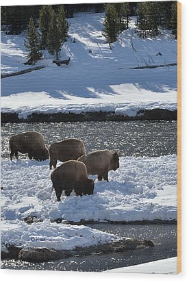 Wood Print featuring the photograph Bison On River Strand by Kae Cheatham