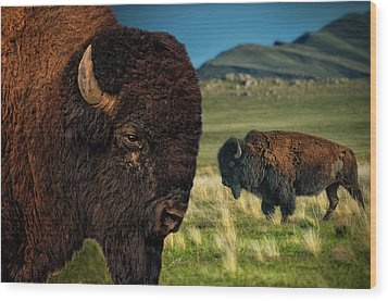Bison On The Plain Wood Print by Paul W Sharpe Aka Wizard of Wonders