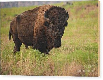 Bison Prime Wood Print
