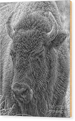 Wood Print featuring the photograph Bison  by Robert Pearson