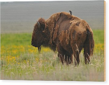 Bison With Cowbird On Back Wood Print by Alan Lenk