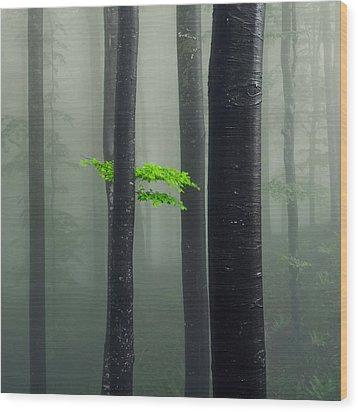 Bit Of Green Wood Print by Evgeni Dinev