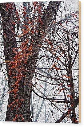 Bittersweet Wood Print by Joy Nichols
