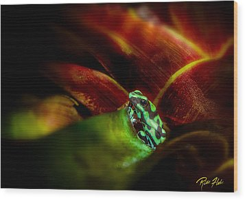 Wood Print featuring the photograph Black And Green Dart Frog In The Red Bromeliad by Rikk Flohr