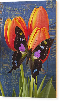 Black And Pink Butterfly Wood Print by Garry Gay