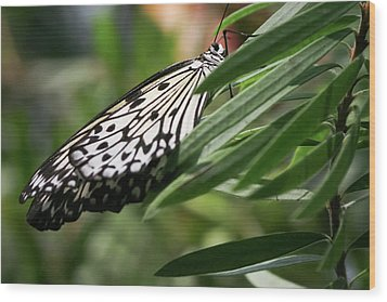 Black And White Butterfly -  Wood Print
