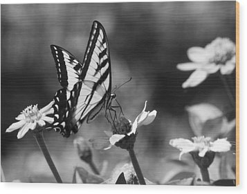 Black And White Butterfly On Flower Wood Print