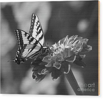 Black And White Butterfly On Zinnia Wood Print