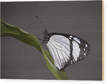 black and white butterfly photographpenny lisowski