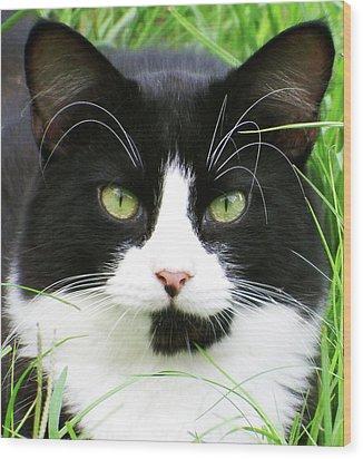 Black And White Cat Wood Print