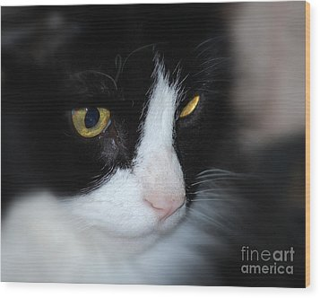 Wood Print featuring the photograph Black And White Cat by Lila Fisher-Wenzel
