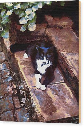 Black And White Cat Resting Regally Wood Print