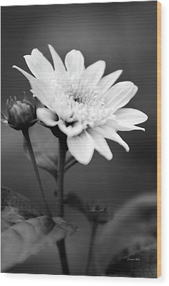 Wood Print featuring the photograph Black And White Coreopsis Flower by Christina Rollo