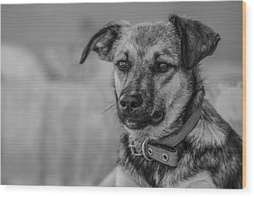 Black And White Dog Portrait Wood Print by Daniel Precht