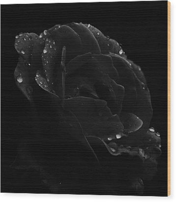 Black And White Flower Fifteen Wood Print by Kevin Blackburn