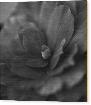 Black And White Flower Fifty Wood Print by Kevin Blackburn