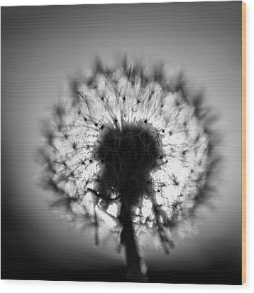 Black And White Flower Ten Wood Print by Kevin Blackburn