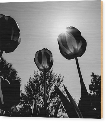 Black And White Flower Thirty One Wood Print by Kevin Blackburn