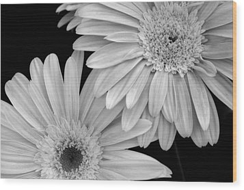 Black And White Gerbera Daisies 1 Wood Print by Amy Fose