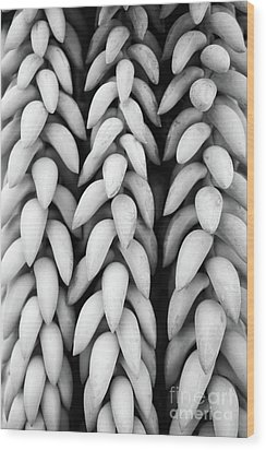 Black And White Hanging Plant Detail. Wood Print by Cesar Padilla