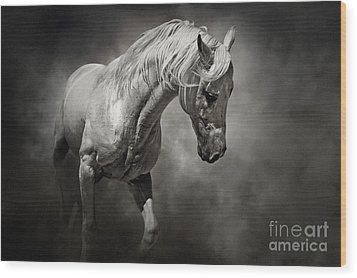 Black And White Horse - Equestrian Art Poster Wood Print