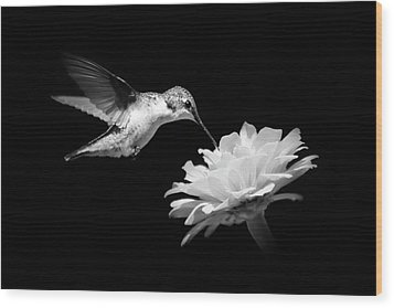 Wood Print featuring the photograph Black And White Hummingbird And Flower by Christina Rollo