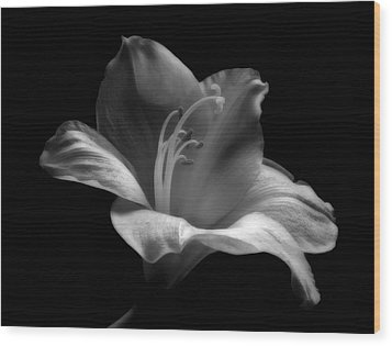 Black And White Lily Wood Print