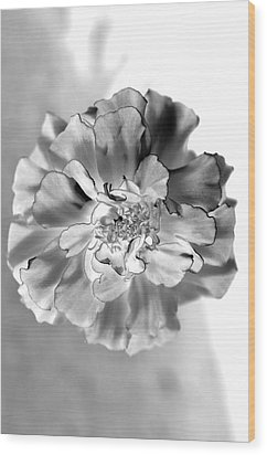 Black And White Marigold Wood Print