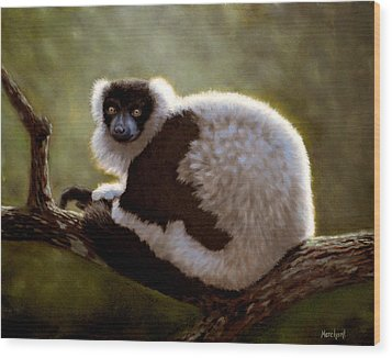 Black And White Ruffed Lemur Wood Print