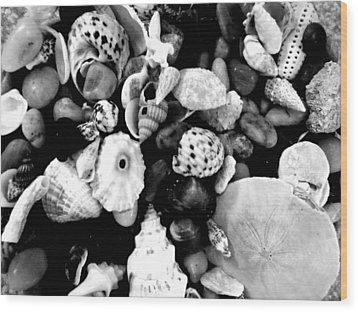 Black And White Seashells Wood Print by Kimberly Perry