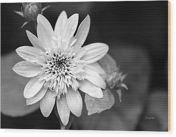 Wood Print featuring the photograph Black And White Sunrise Coreopsis by Christina Rollo