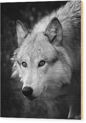 Black And White Wolf Wood Print