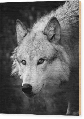 Black And White Wolf Wood Print by Steve McKinzie