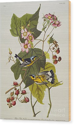 Black And Yellow Warbler Wood Print by John James Audubon