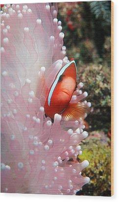 Black Anemone Fish Wood Print by Georgette Douwma