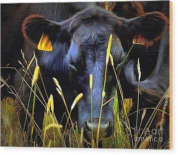 Black Angus Cow  Wood Print