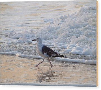 Wood Print featuring the photograph Black-backed Gull by  Newwwman