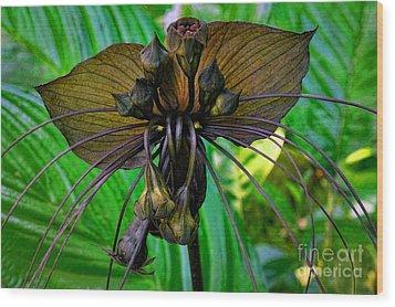 Black Bat Orchid Wood Print by Sue Melvin